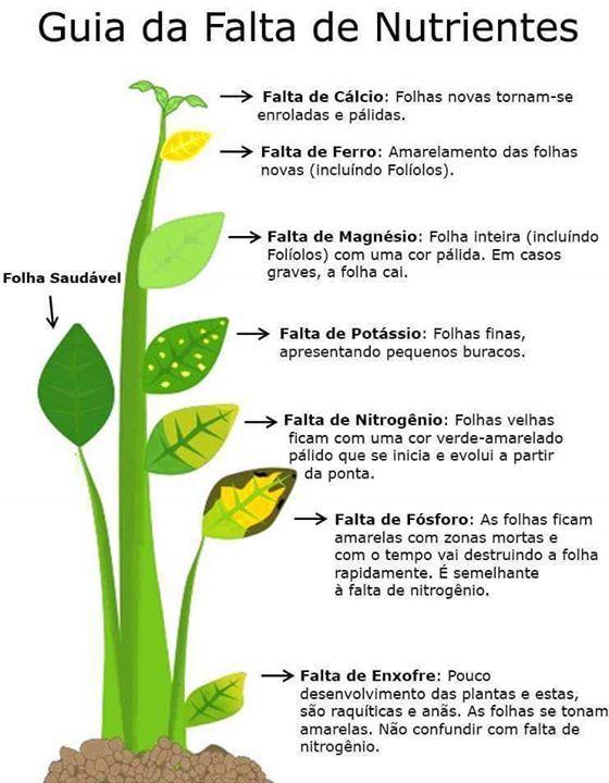 nutrientes